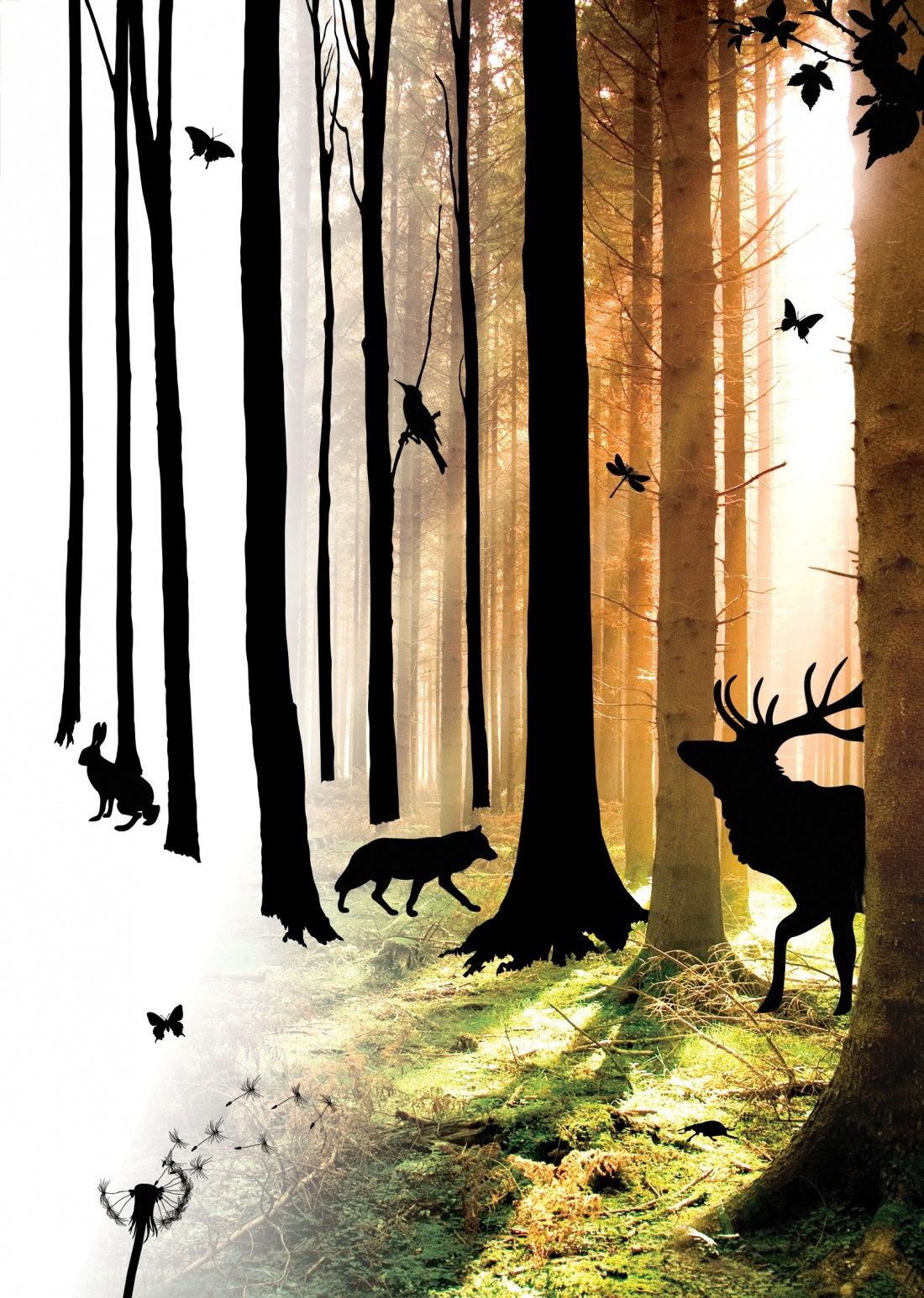 The Forest promotional artwork for the performance in Lancaster in 2012